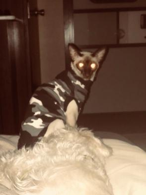 Spirit in Cats Pajamas