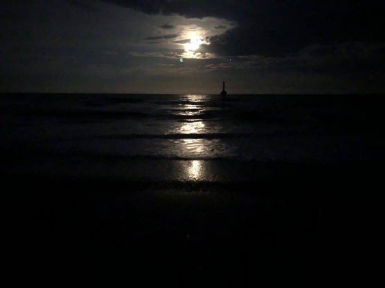 Moonlit night Hunting Island State Park Beaufort South Carolina