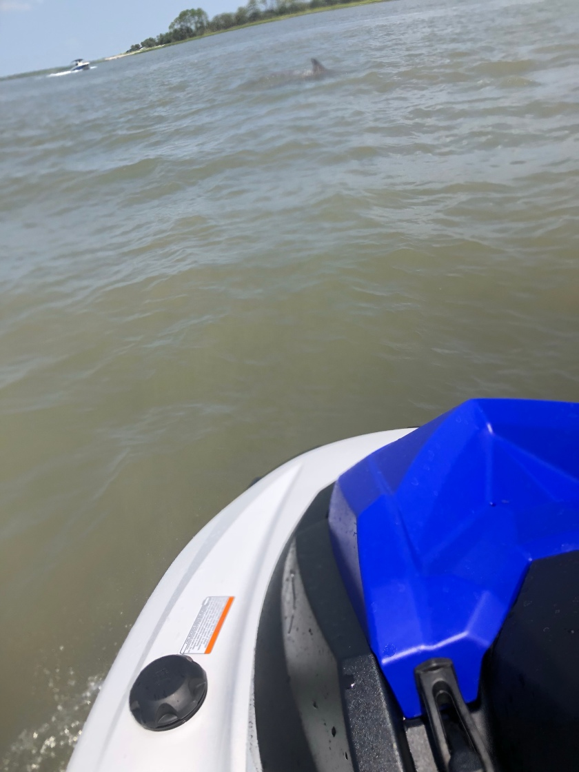Yamaha WaveRunner in St. Helena Sound between Hunting Island State Park and Fripp Island, South Carolina Dolphin
